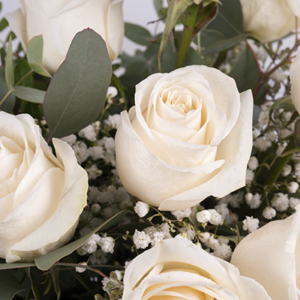 weiße rosen bedeutung